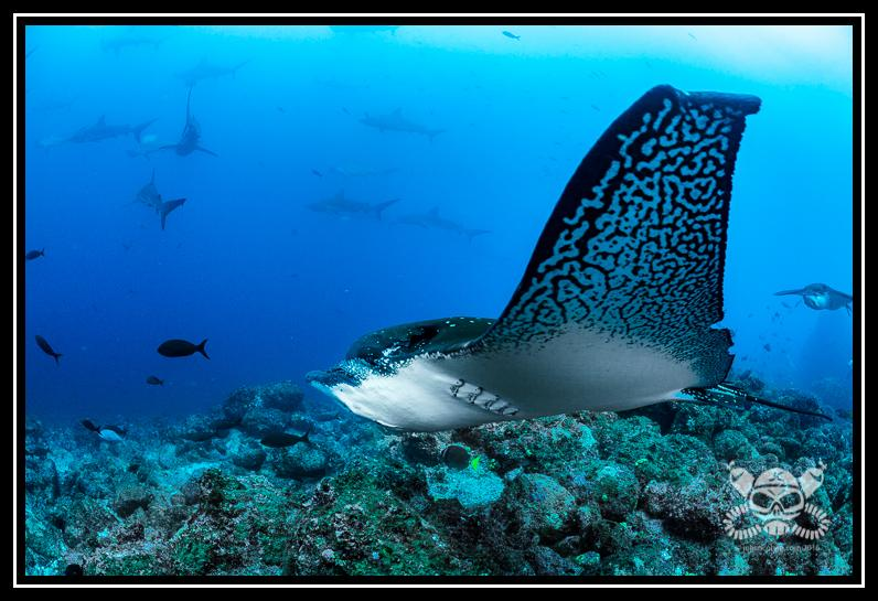 wpid-2016-7GalapagosDiving-1214-Edit-2016-07-5-04-22.jpg