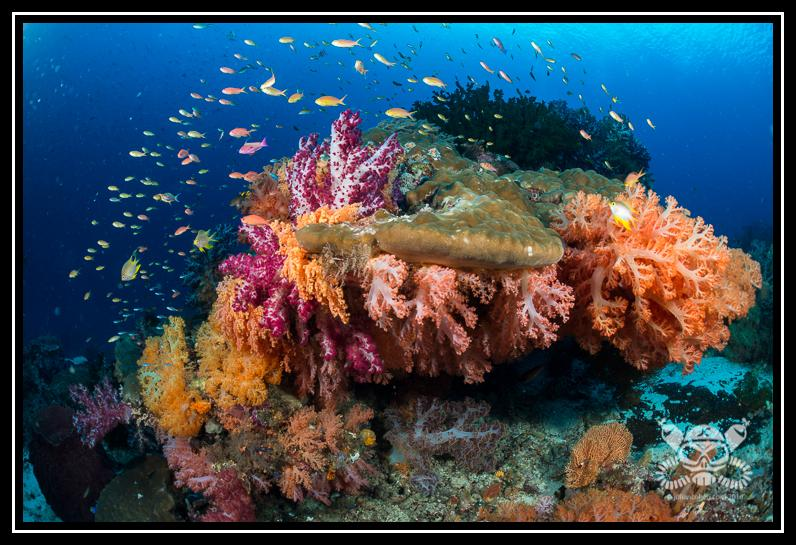 wpid-2016-9Indonesia-RajaAmpat-213-Edit-2016-09-10-19-36.jpg